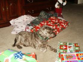 Mitzy at Christmas
