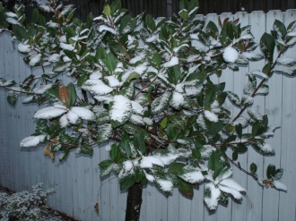 snow-on-small-tree-101226