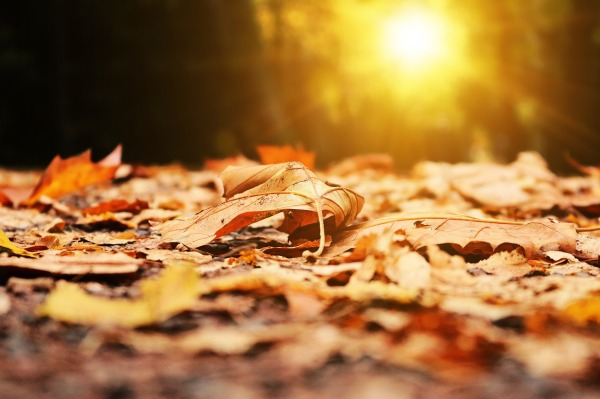 Sun rising over a bed of fallen leaves